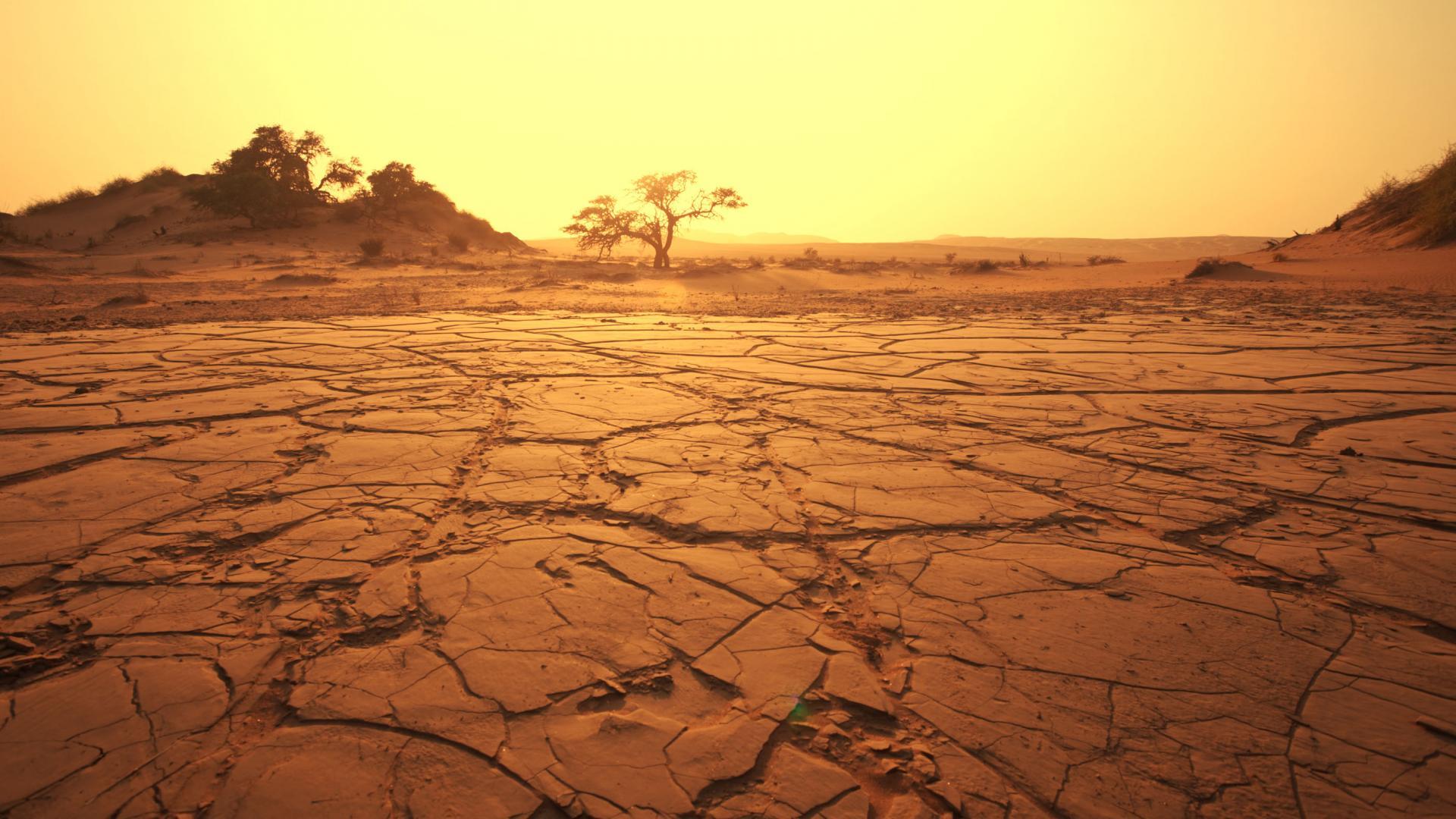 Comment survivre dans le désert ?
