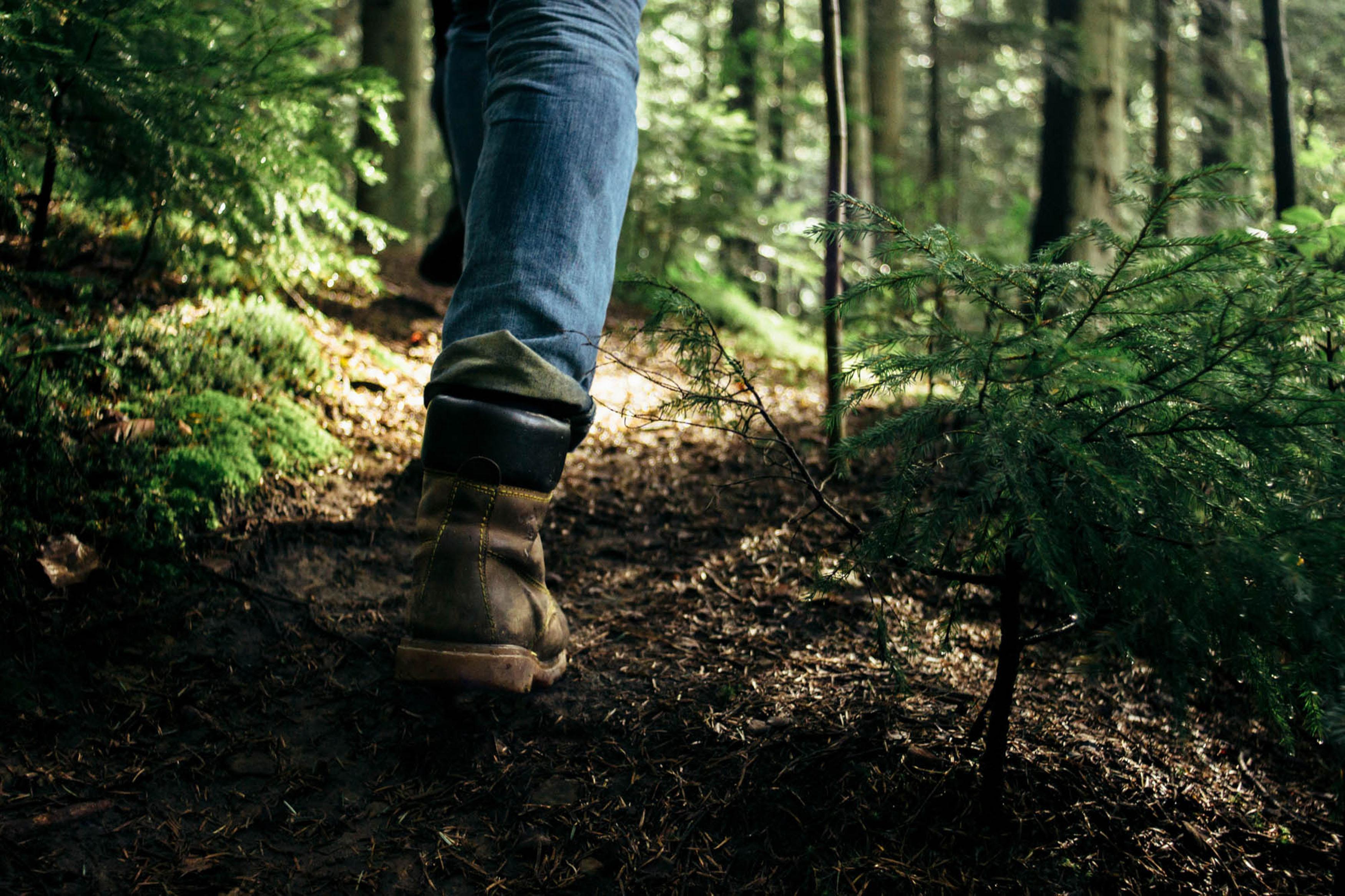 N'ignorez surtout pas ce guide de survie en forêt si vous voulez vous en sortir indemne