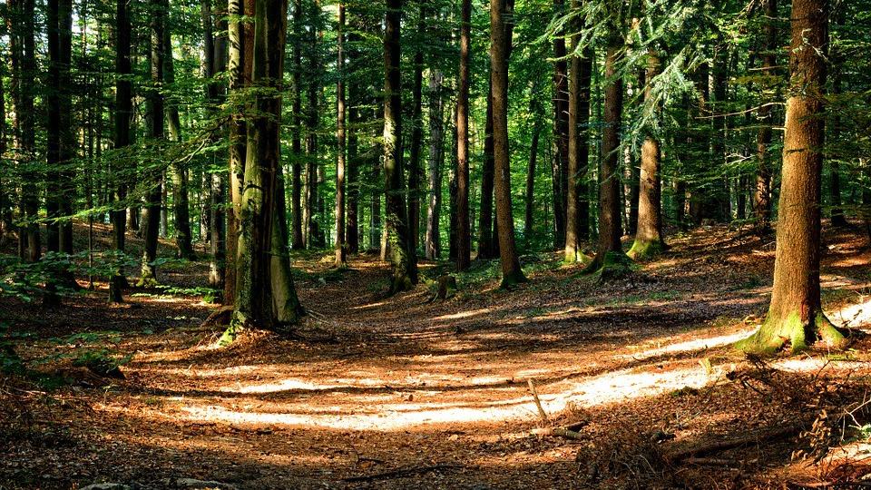Comment survivre en forêt ?